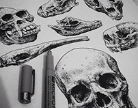 Pen and Ink - Skulls part. II