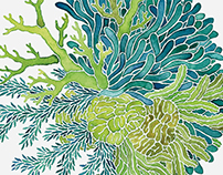 Sea Plant Illustrations