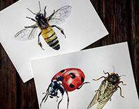 Insects. Watercolor illustrations