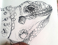 Iguana Sketch (Work In Progress video).