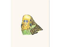 Prettyboy the Green Parakeet - 8x10 print