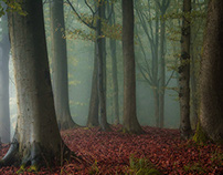 Secret Woods #1