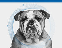 ZIX // Infographic & Implementation eGuide