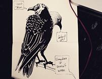 black sketch's