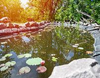 Backyard Fish Pond Design & Construction in Edison NJ