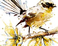 Watercolour Fantail