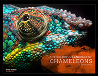 The Colorful Language of Chameleons - DPS