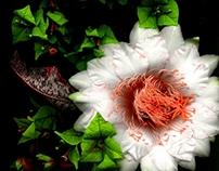 Flowers scanography II