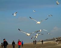 Seagull, Egmond aan Zee, 2016