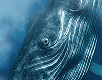 Beautiful Whale Poster