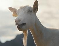 TINE - Goat