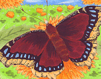 Viceroy Sketch Cards : Insectae