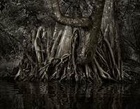 Savannah Swamp: A Cathedral In Nature