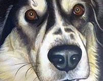 Pet portrait - Mason