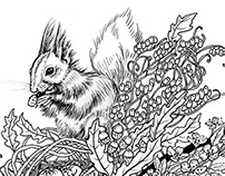 Illustrations of animals and plants