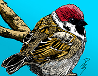 Garden Bird Portraits - Series 1