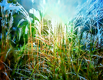 Light over herbs