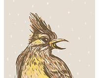7 ptica pevačica / 7 bird siingers /