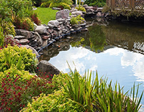 Things to Consider Before Koi Pond Design and Install
