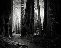 in the redwoods ...