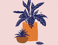 Pot illustration