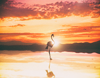 Flamingo, Lake