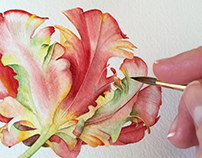 Parrot tulip watercolor illustration