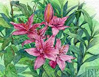 Королевские лилии | Royal Lily