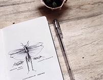 Week III - Insects * 30daydrawinganimals