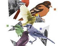 Bird Brainz Collage