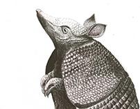 Fauna Colombiana