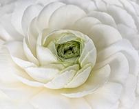 Unfolding spiral