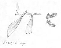 Bocetos Plantas