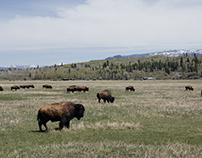 Grand Teton National Park Wildlife
