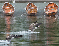 A Few Birds Of England !