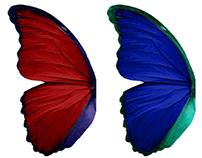 Butterfly Wings: Sinasprite Art Assets