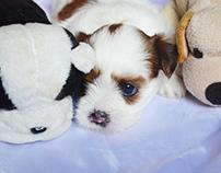 Pet Photography: Peppa