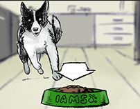 Storyboards for IAMS pet food