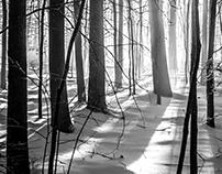 NH Woods