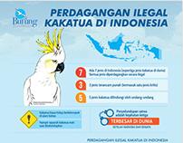 Poster Perdagangan Ilegal Kakatua di Indonesia