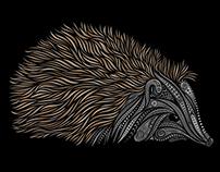 Hedgehog, vector art