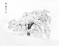 White, Silence, Tree
