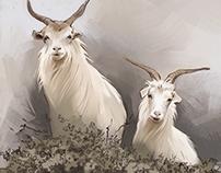 Loro Piana goats