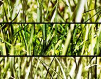 summer experiment #1: multi-lens