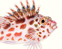 Scientific Illustration: Fish and Sea Creatures