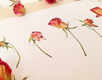 Dead rose watercolour illustration