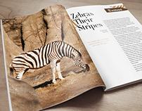 Metazoa Magazine