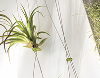 Airplant for Teracrea - Plants Hanger