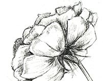 Flower Study Sketches