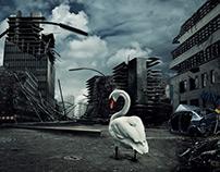 the last swan